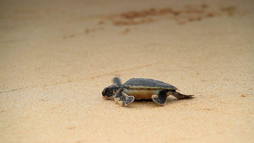 Rising Temperatures Cause Sea Turtles to Turn Female