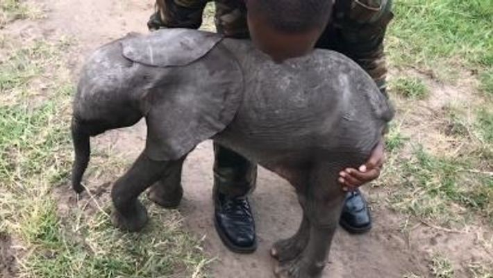 Baby Elephant Takes A Ride In A Helicopter