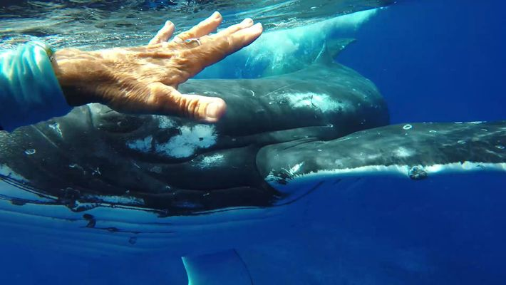 Was This Whale Trying to Save a Diver's Life?