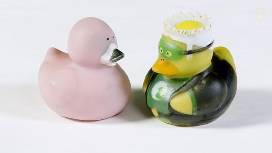 Rubber Duckies and Other Surprising Spots Germs Love