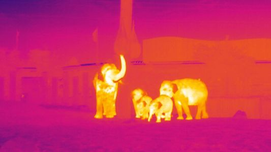 How Infrared Technology Could Help Fight Wildlife Poaching