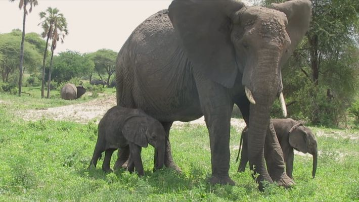 Against the Odds, Rare African Elephant Twins are Thriving