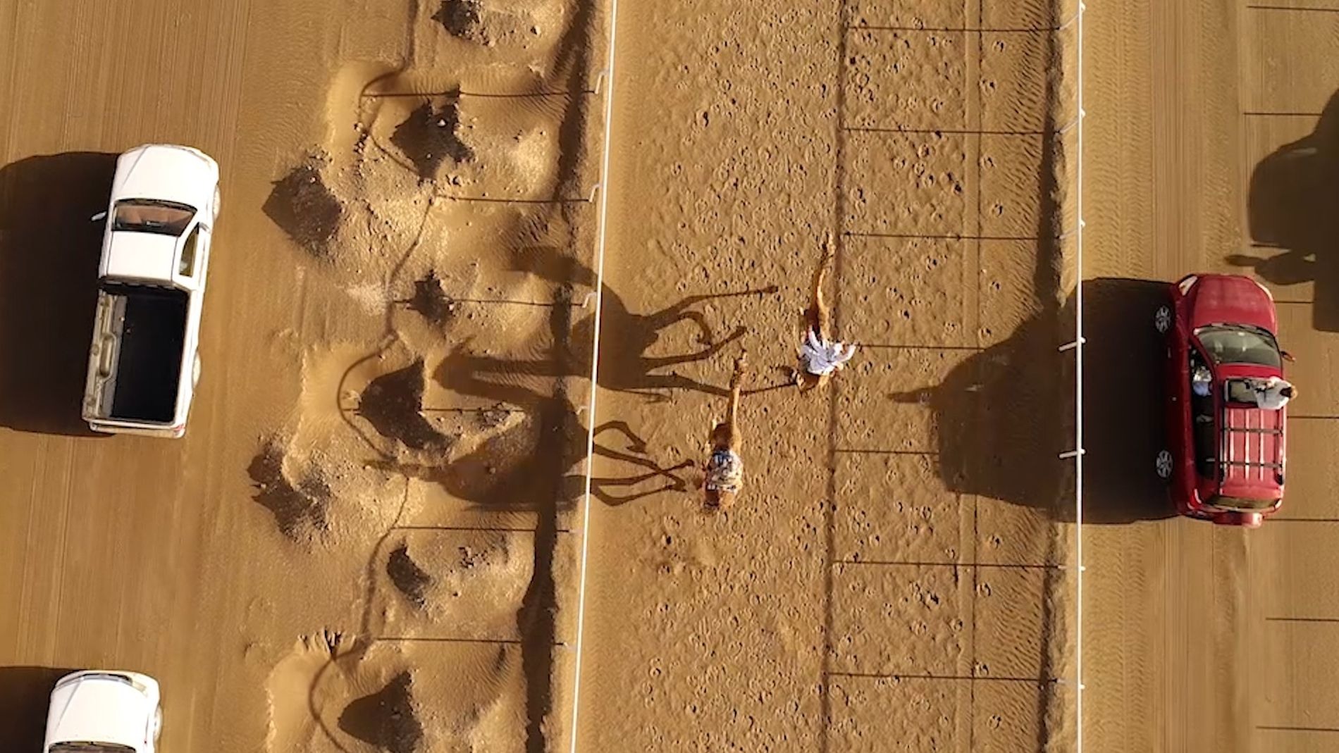 The Ancient Tradition of Camel Racing, as Seen From Above