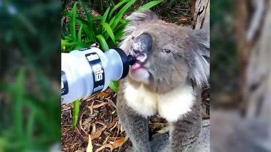 The Crazy Ways Australia's Animals Are Dealing With Its Heat Wave
