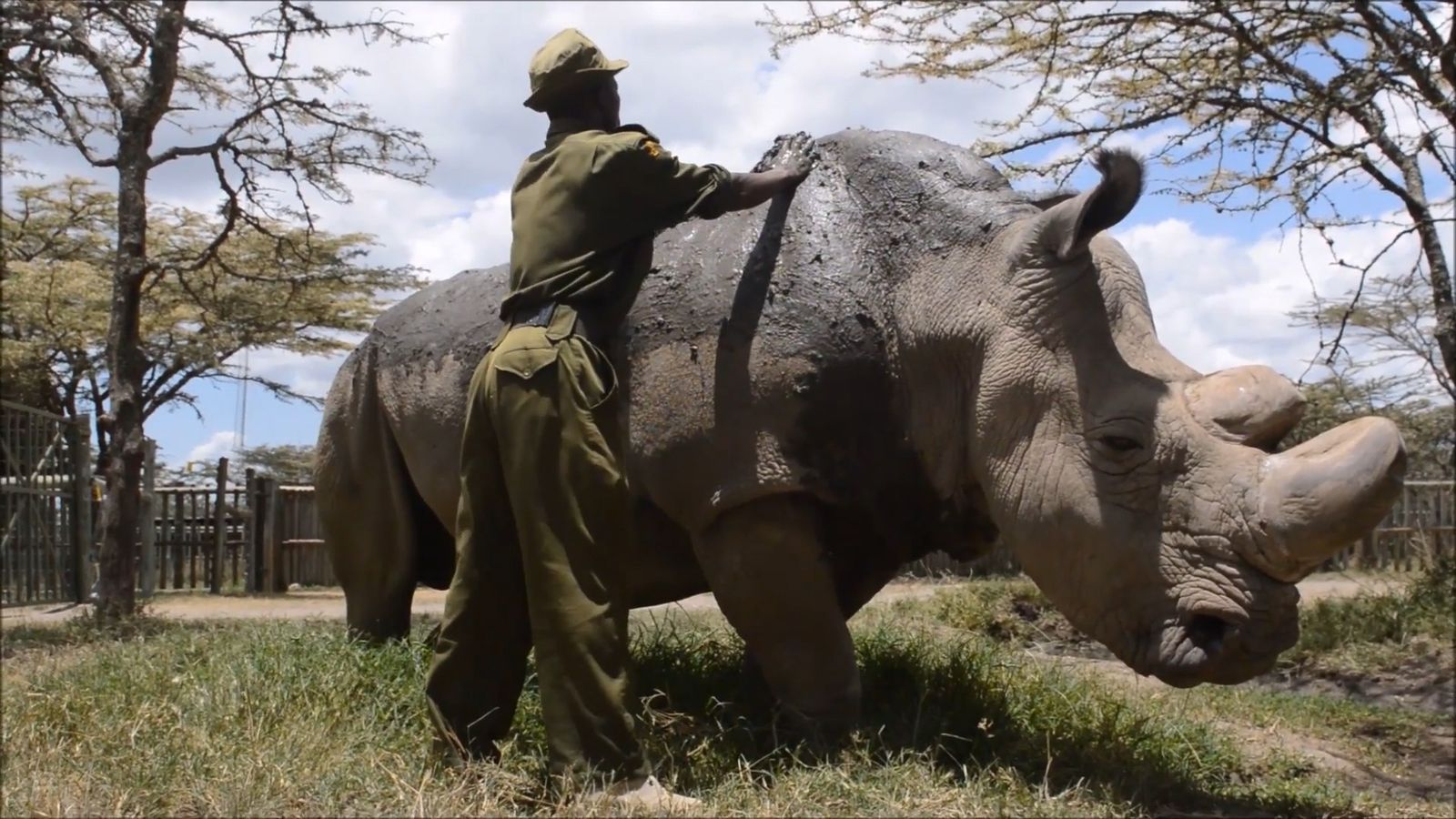 Sudan, the Last Remaining Male White Rhino, Has Died