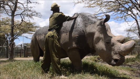 Sudan, the Last Remaining Male White Rhino, Has Died