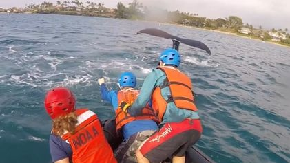 Rescuers Free Humpback Whales Caught in Fishing Lines in Hawaii