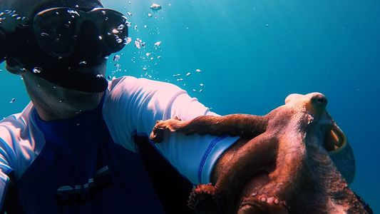 Watch an Octopus Hitch a Ride on a Diver's Arm