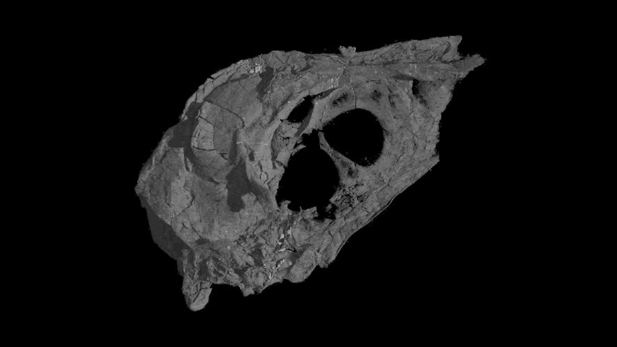 Dinosaur-Era Bird Found With Shockingly Intact Skull