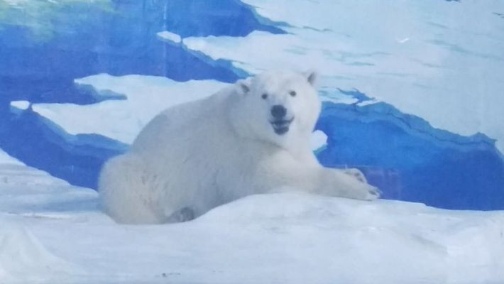 The 'World's Saddest Polar Bear' Has Been Reunited With His Mother