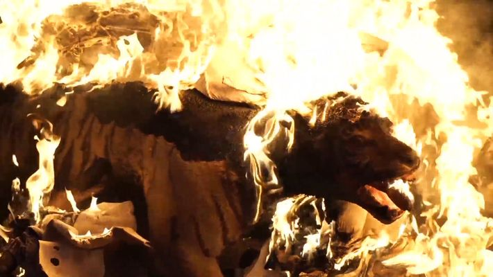 Watch: Stuffed Tiger and Other Wildlife Contraband Burned
