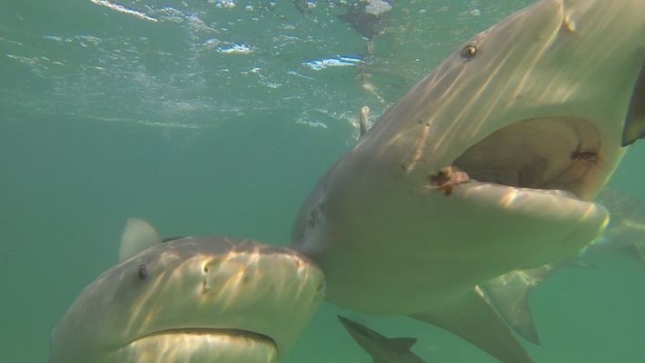 Want to Keep Sharks Away? Try Magnets