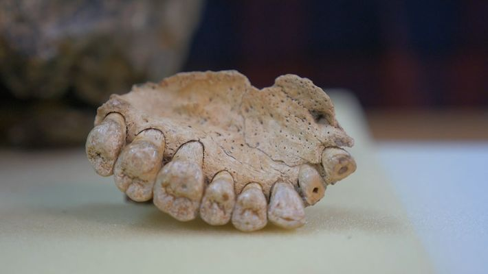 Oldest Human Fossil Outside Africa Discovered in Israel