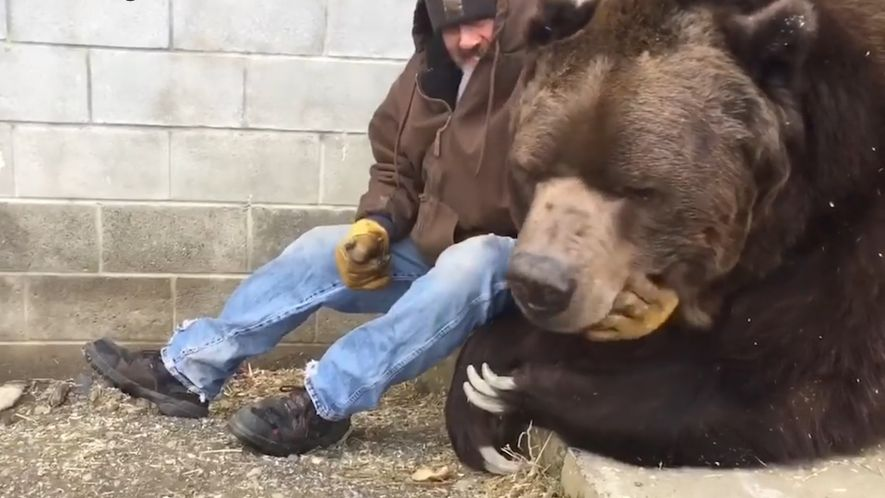 This Orphaned 680kg Kodiak Bear Is Sick—Needs Hugs