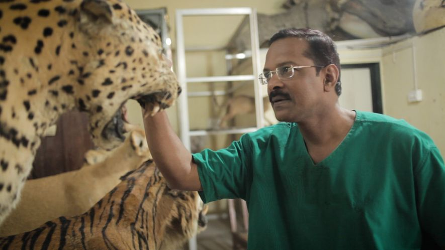 This Self-Taught Taxidermist May Be the Last One in India