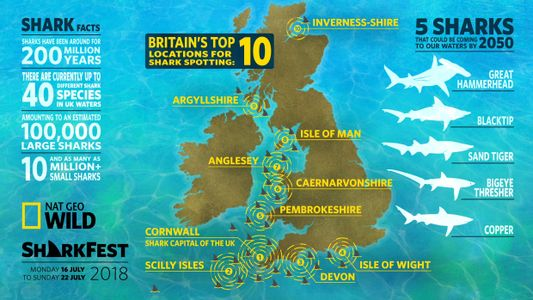 sharks are coming to UK waters