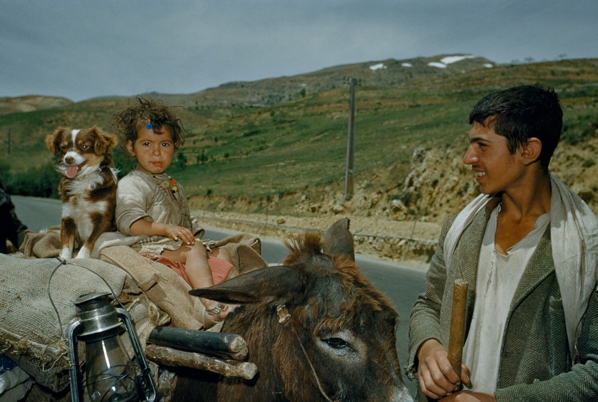 Lebanon, 1954: a travelling family using a donkey cart for transport smile for the camera. Middle ...