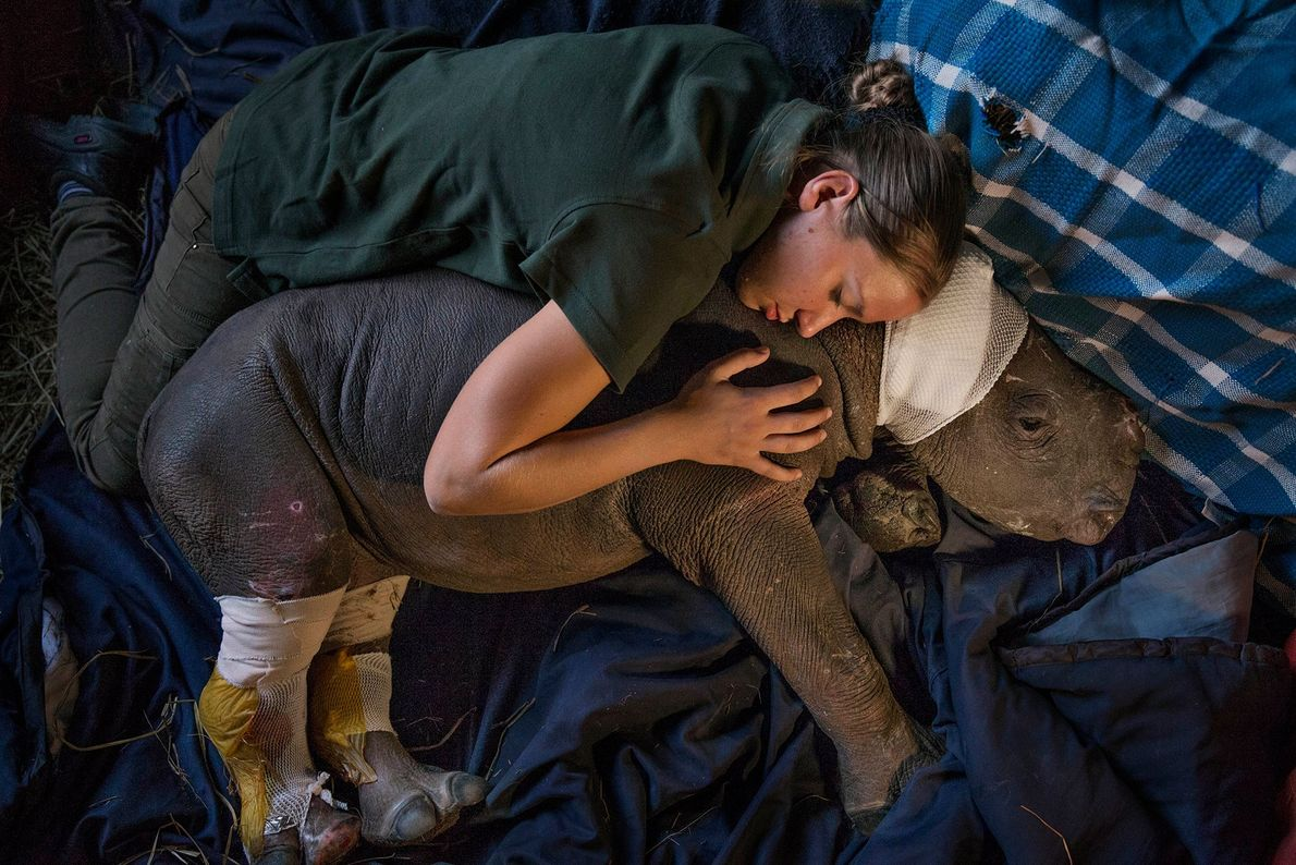 Lulah's mother was killed by poachers in Kruger National Park. She now lives at Care for ...
