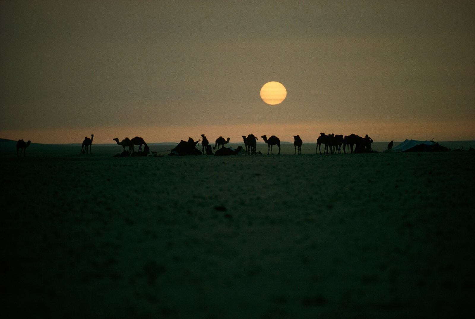 Thomas J. Abercrombie's iconic image of bedouins in Saudi Arabia, 1965. The term for bedouin comes from ...