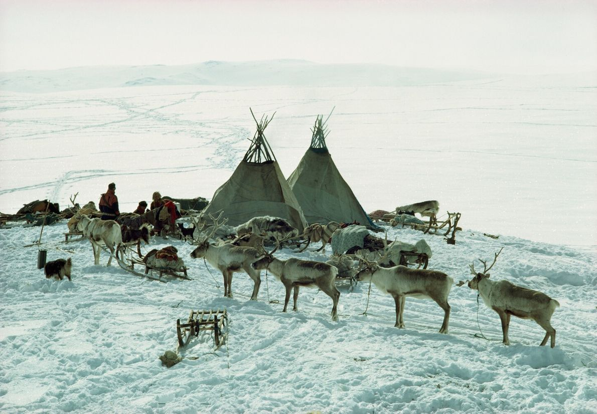 Norway, 1971: The Sami's nomadic lifestyle began relatively recently, developing over the last few centuries. Most ...