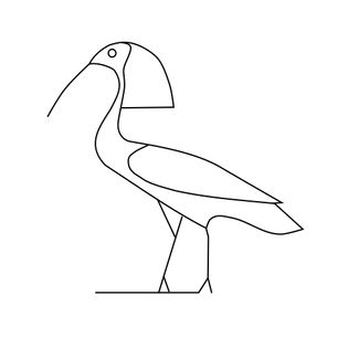 The northern bald ibis has appeared as an ancient Egyptian hieroglyph.