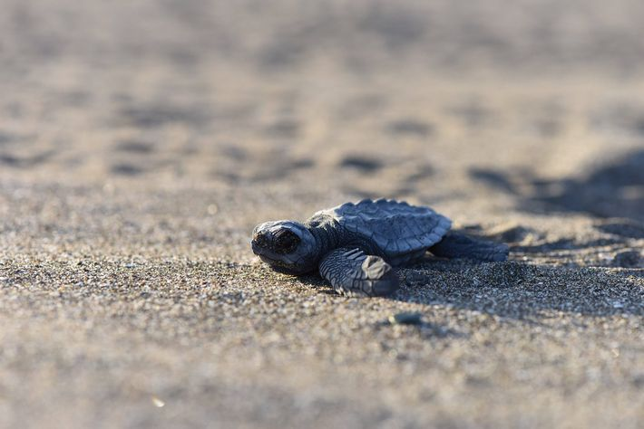 "Hostile Planet's eye is close, and unblinking. Matteo Willis: ""as a baby turtle flaps its way ..."