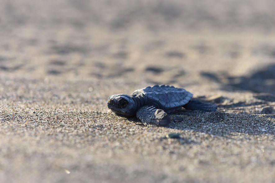 """Hostile Planet's eye is close, and unblinking. Matteo Willis: """"as a baby turtle flaps its way ..."""