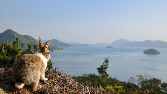 Rabbit Island, Setouchi