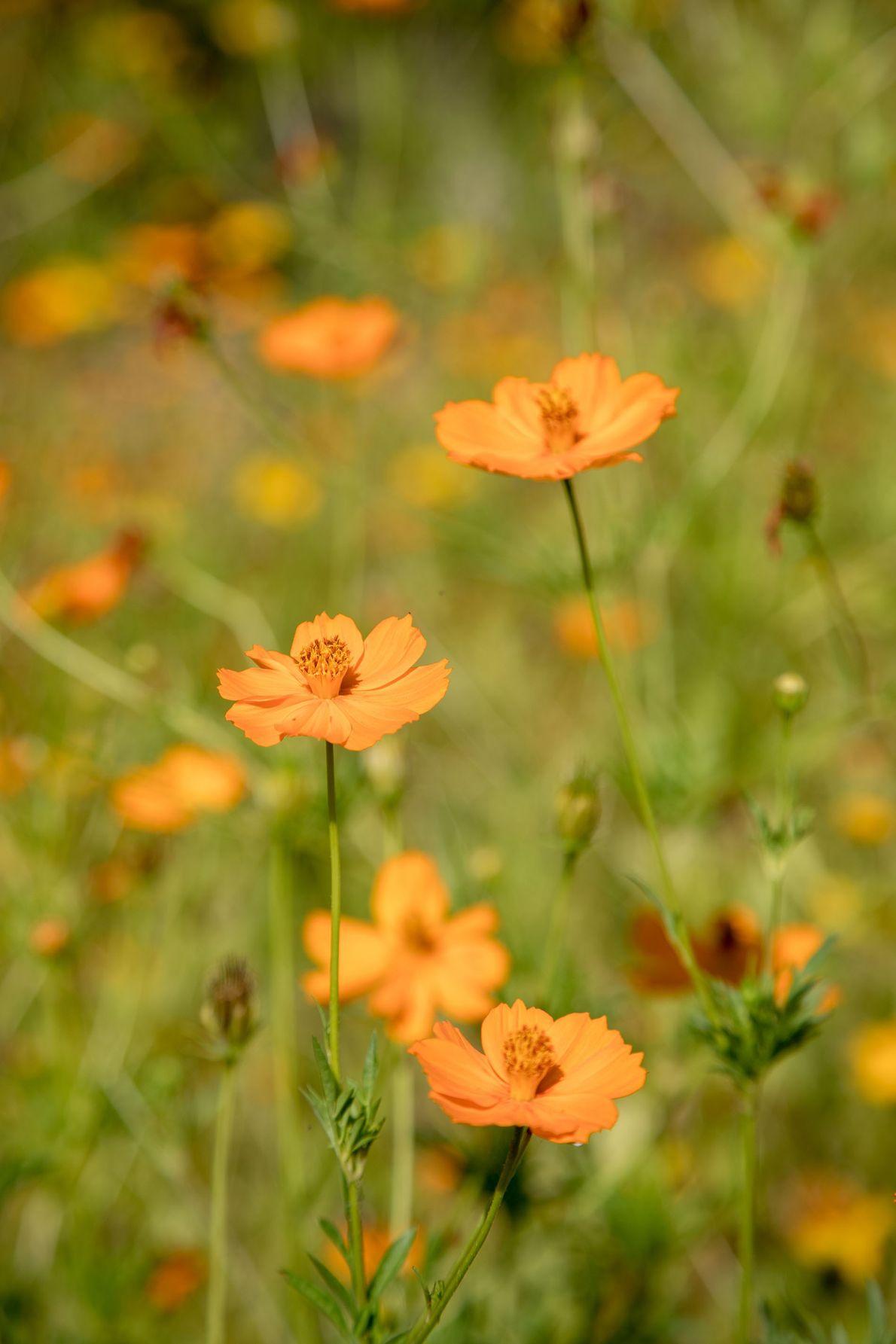 Flowers on Ometepe Island
