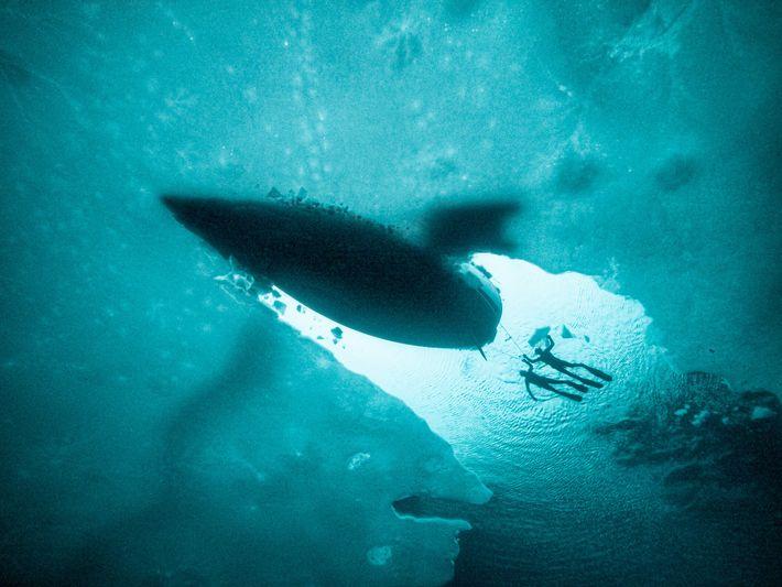 Fabrice Schnöller and Aksel Ørstavik are towed behind Barba while free-diving in frozen Trollfjorden.