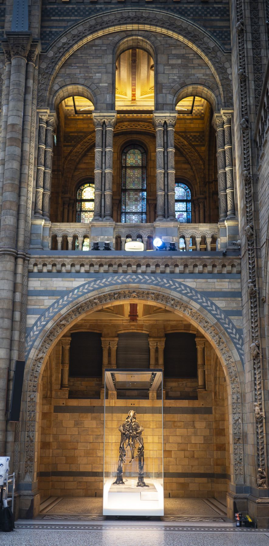 Mantellisaurus is now back on display in Hintze Hall. Like many other specimens, the skeleton has a new digital life and will be able to be accessed by researchers all over the world.