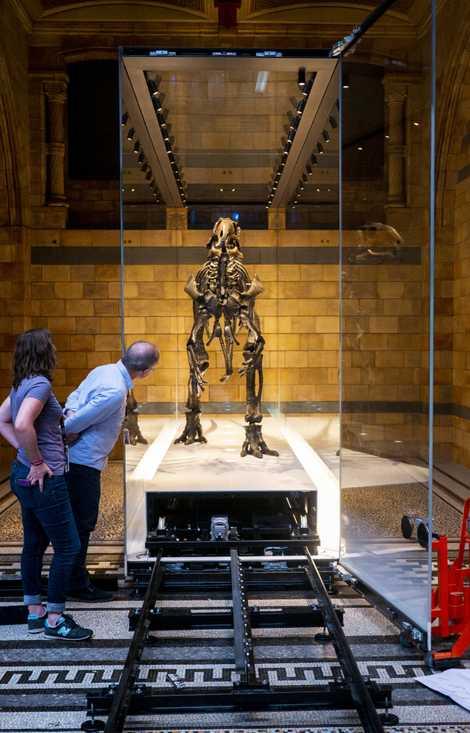 Susannah Maidment and Mark Graham peer into the open Mantellisaurus case.