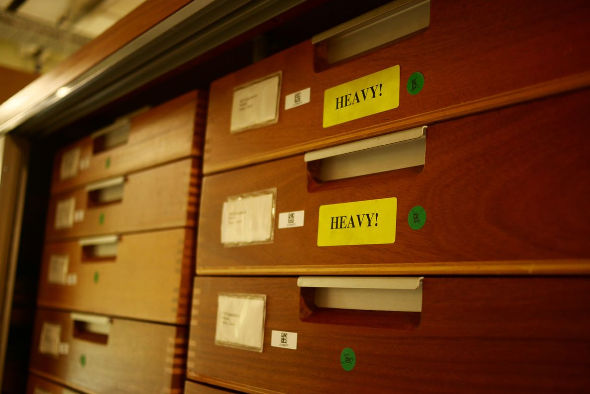 The fossil storerooms in the basement of the museum are where many samples too fragile to ...