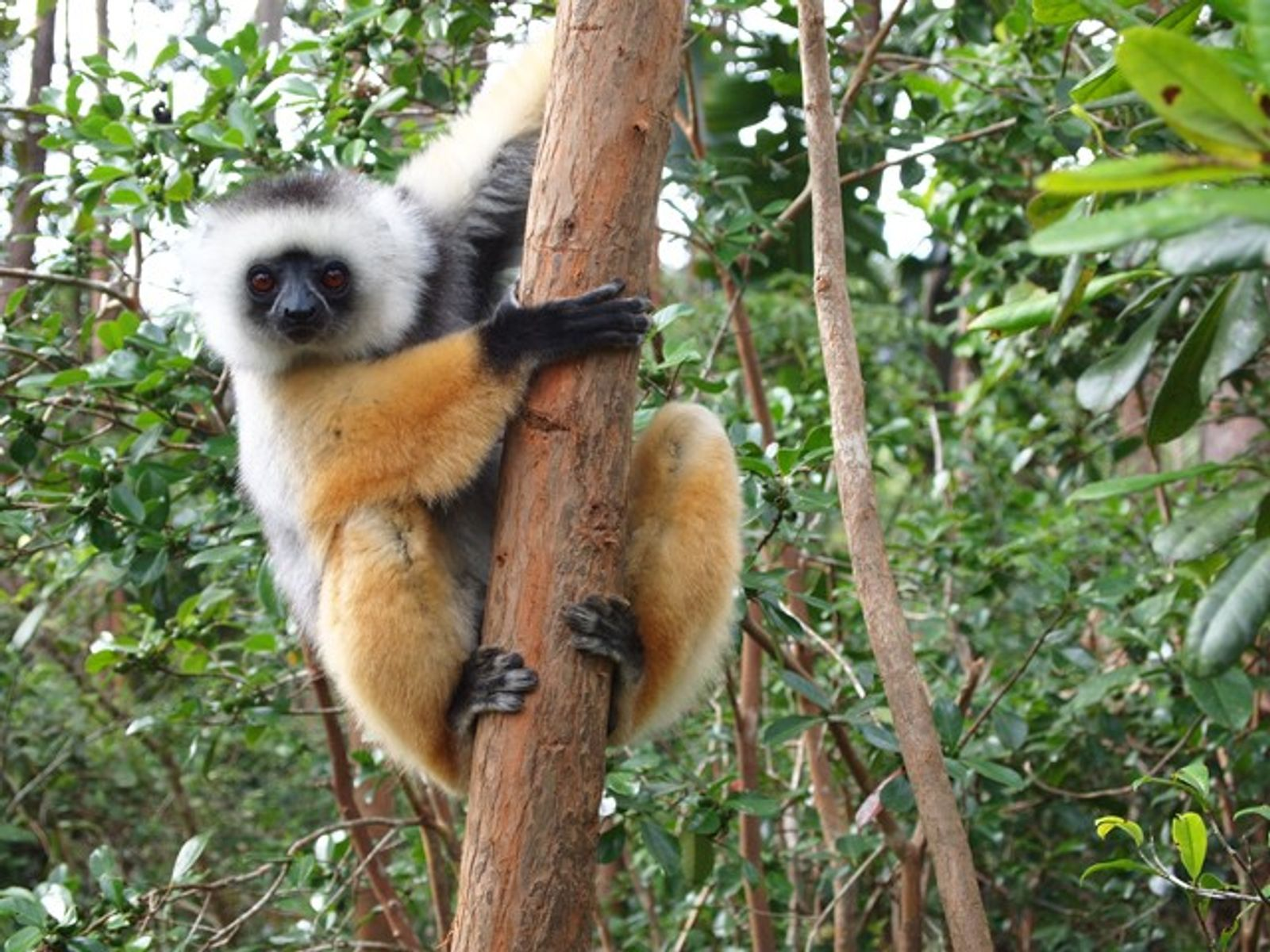 Madagascar: Land of lemurs