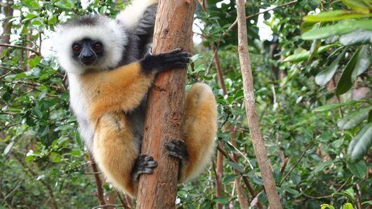 Madagascar: Land of lemurs