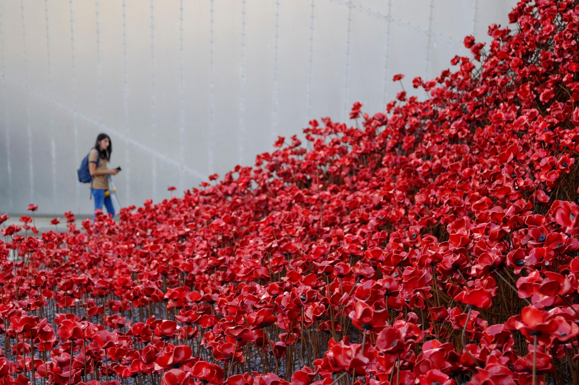 The 'Weeping Window' installation at the Imperial War Museum in Salford was one of several by artist Paul Cummins and exhibitor Tom Piper – marking the lives lost during World War 1 with the use of ceramic poppies. The flower is just one of many symbols of remembrance that came into being following the 1914-1918 war.