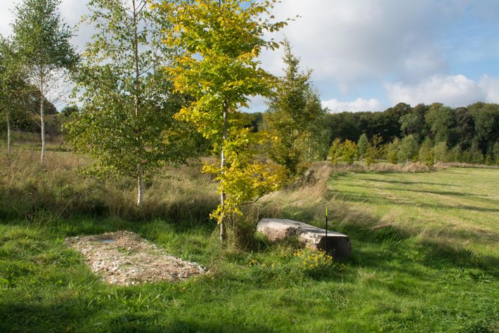 The progress of natural burial: a simple grave at Clandon Wood Nature Reserve & Natural Burial ...