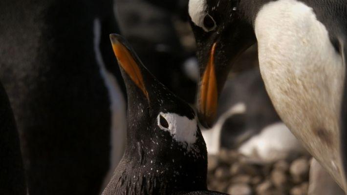 Penguin Love Story