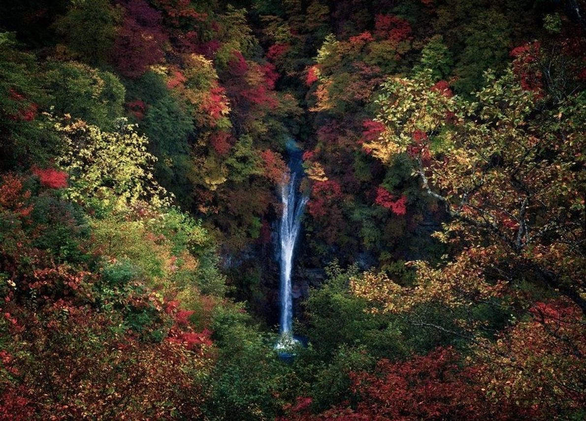 Picture of a waterfall surrounded by colourful autumn trees in Japan