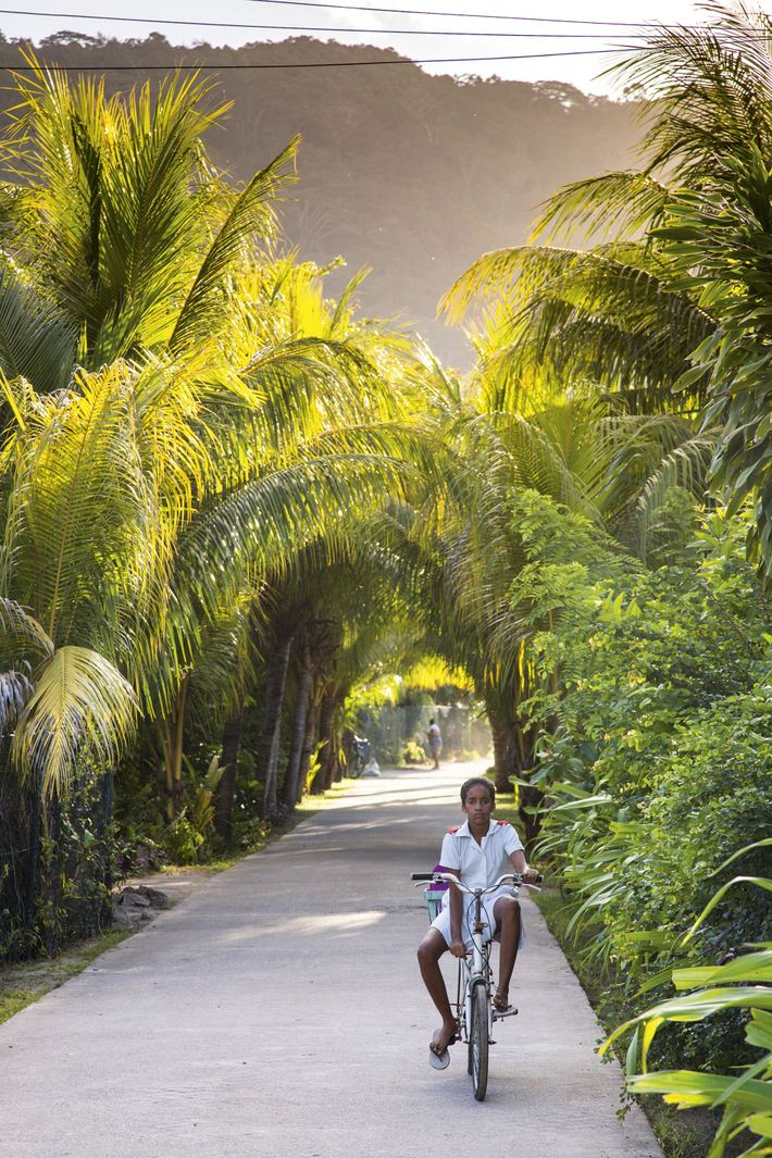 A person cycles under the shaded palm trees on the Seychelles island of La Digue
