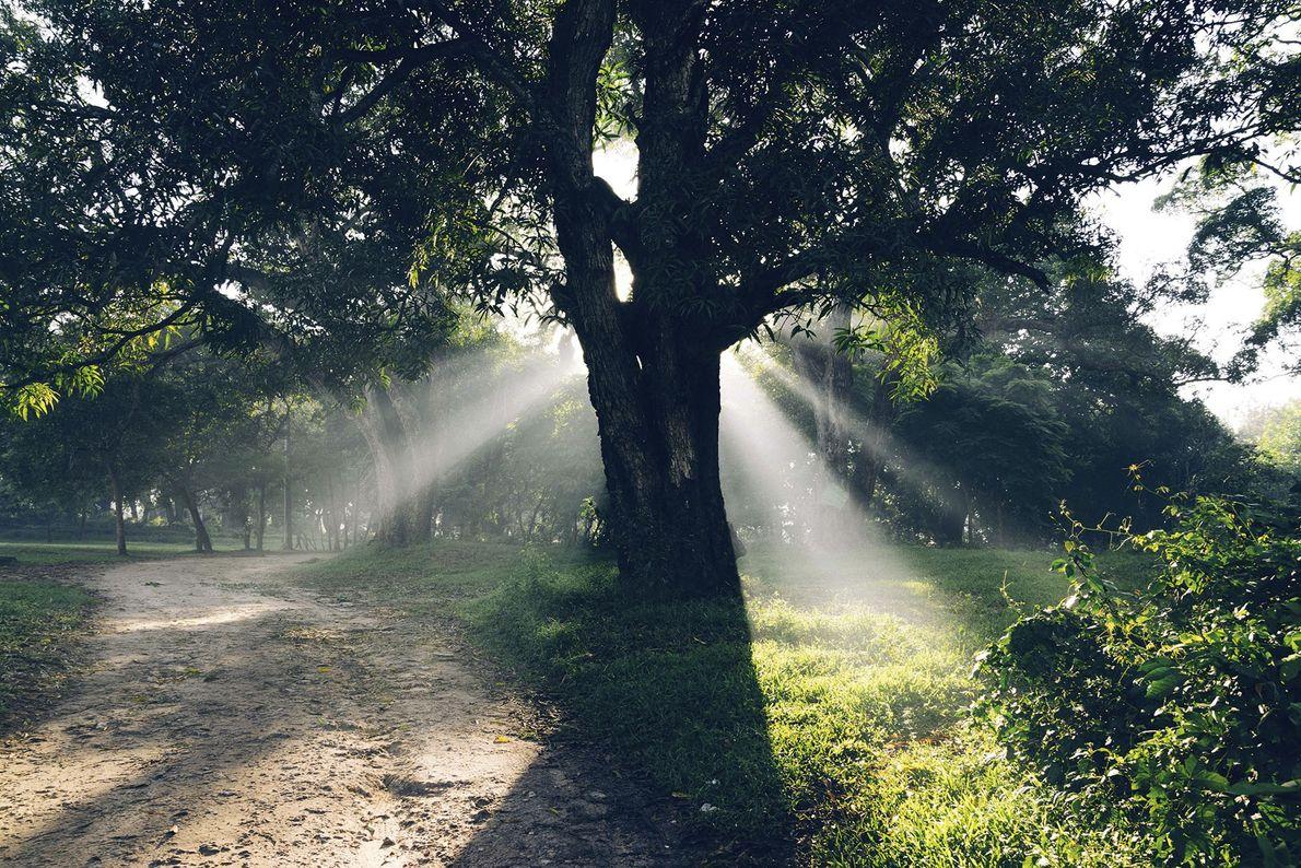 A ray of sun hits a tree.