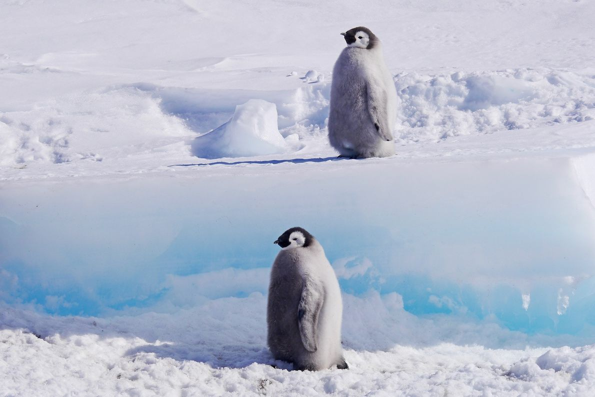 Hostile Planet spend over a month documenting the life of the Emperor Penguin colony at Cape ...