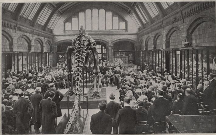 Lord Avebury presents Dippy at its original unveiling at the Natural History Museum, London, in 1905. ...