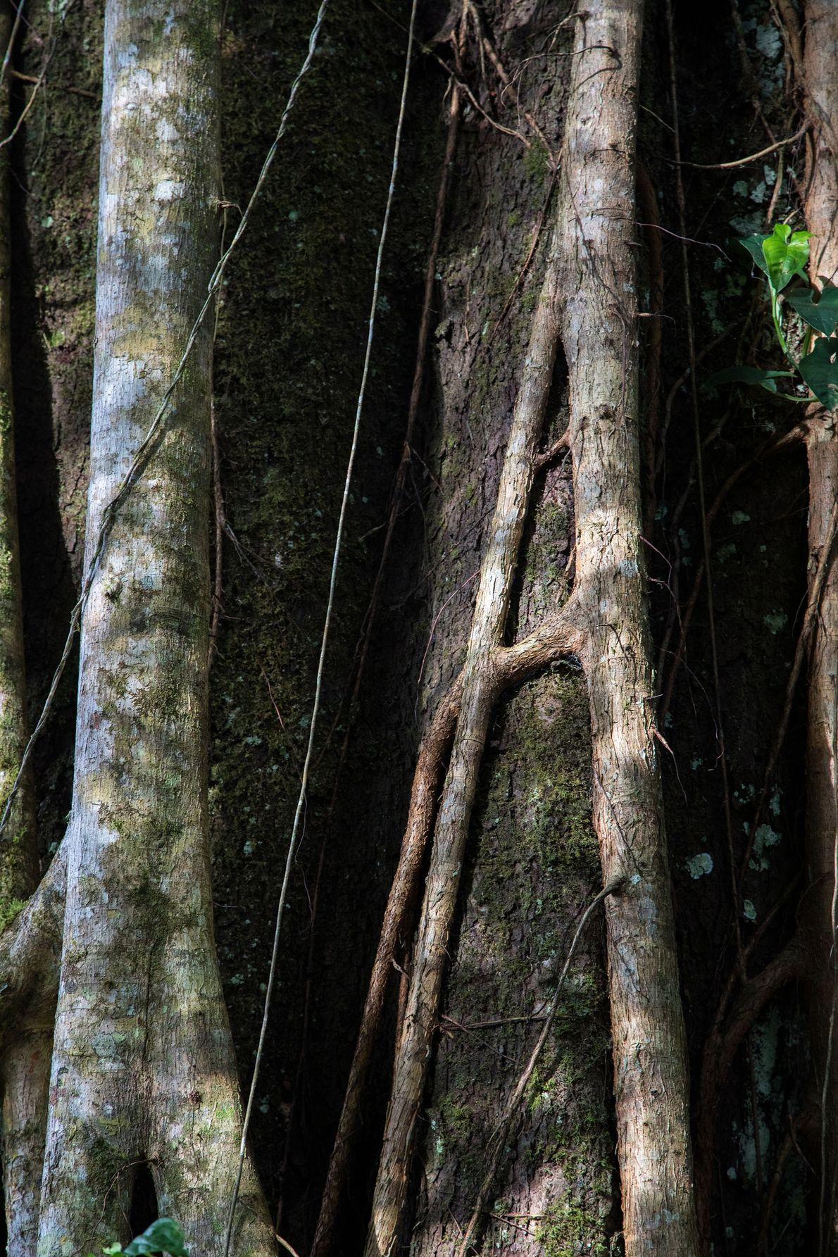 Puma Trail
