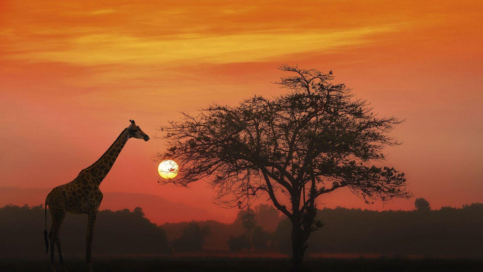 Giraffe in the bush.