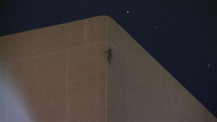 Watch a Raccoon Scale a 25-Story Building in Minnesota