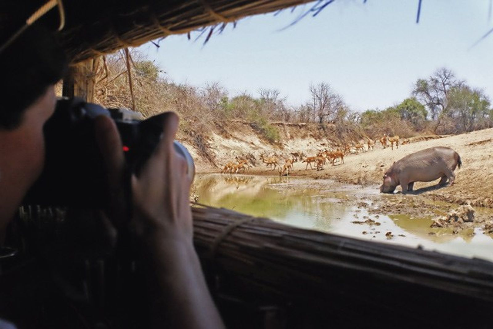 Zambia: Watching wildlife from a hide