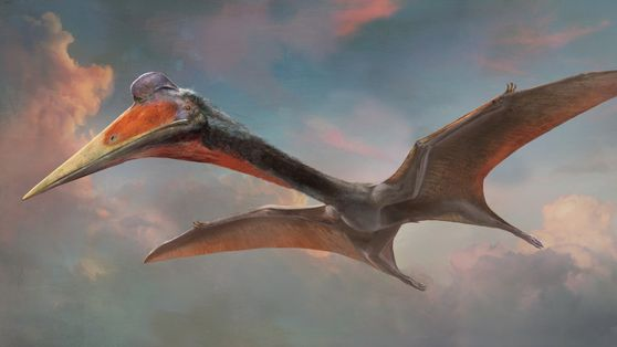 Find Out About Pterosaurs: The First Dinosaurs To Fly