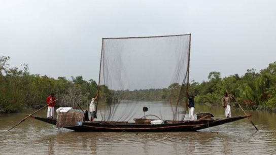 Otter fishing in Bangladesh.