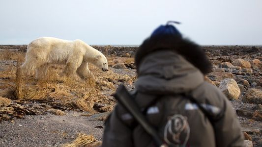 Manitoba: Close encounter of the bear kind